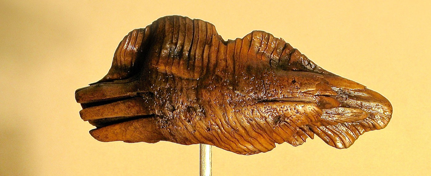 Root Fish woodcarving sculpture